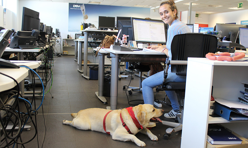 dia internacional llevar perro trabajo oficina dsv rubi