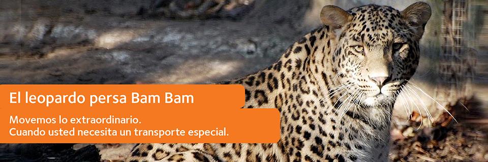leopardo persa bambam
