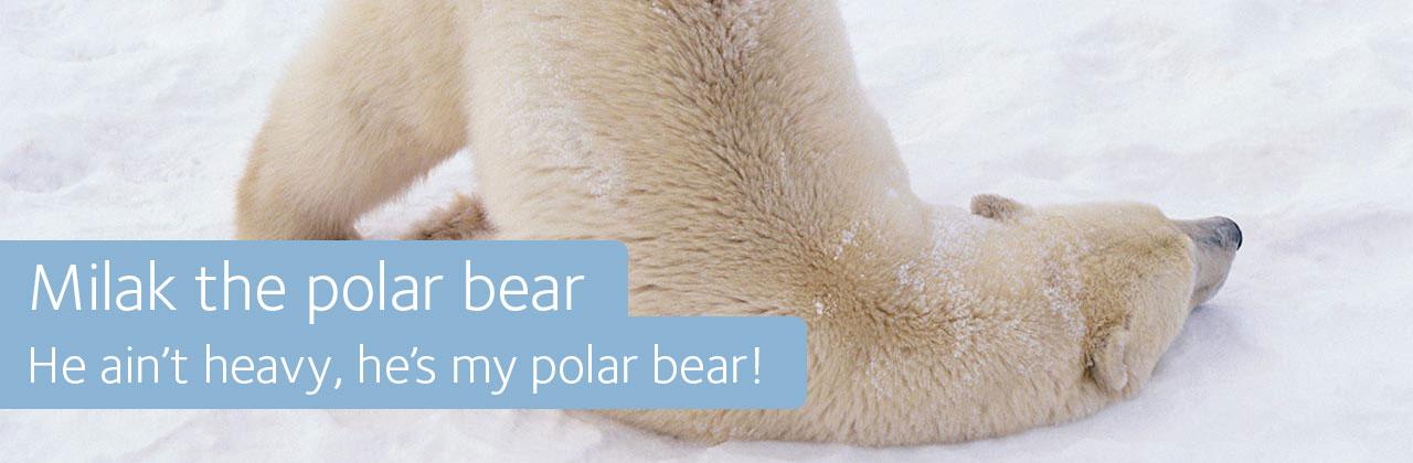 Milak polar bear