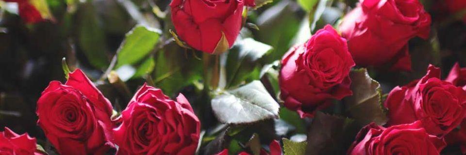 perishables roses
